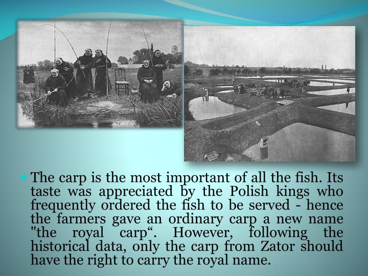 "The carp is the most important of all the fish. Its taste was appreciated by the Polish kings who frequently ordered the fish to be served - hence the farmers gave an ordinary carp a new name ""the royal carp"". However, following the historical data, only the carp from Zator should have the right to carry the royal name."