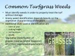 common turfgrass weeds