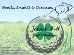 weeds insects diseases