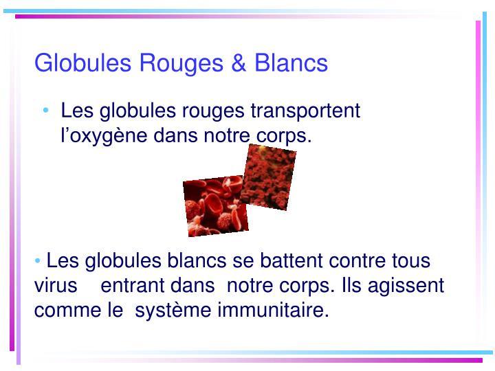 Globules rouges blancs
