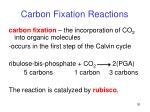 carbon fixation reactions2