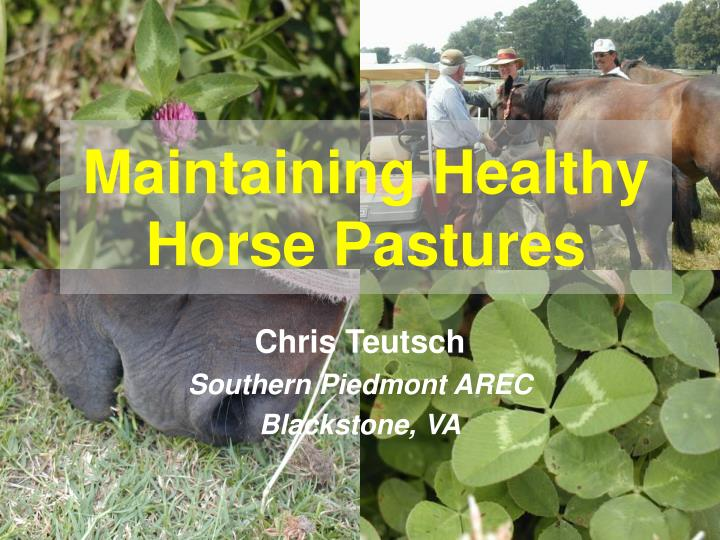 maintaining healthy horse pastures n.