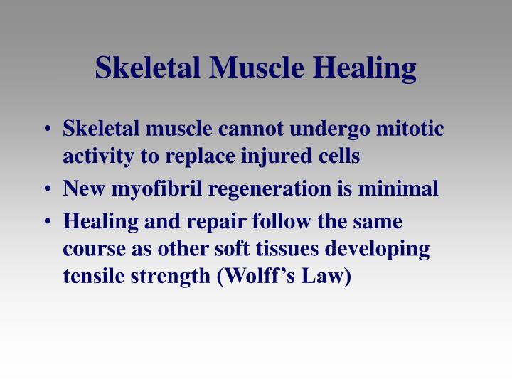 Skeletal Muscle Healing