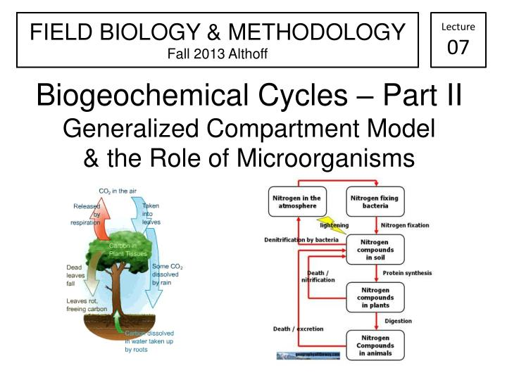 biogeochemical cycles part ii generalized compartment model the role of microorganisms n.
