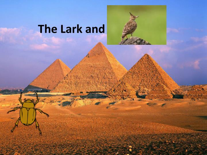 the lark and the beetle n.