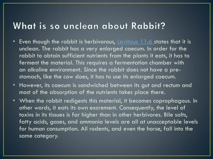 What is so unclean about Rabbit?