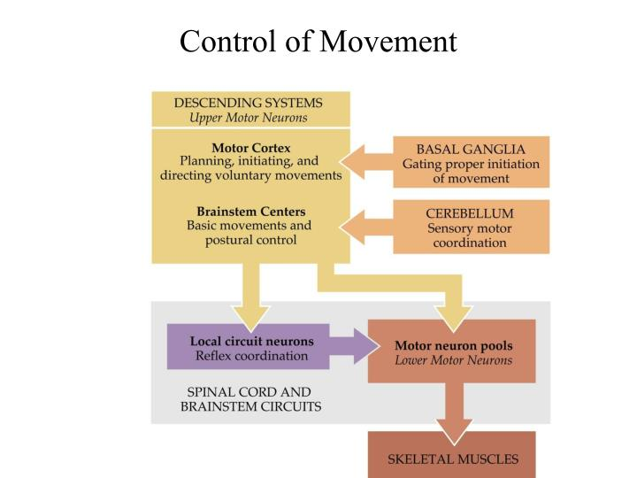 control of movement n.