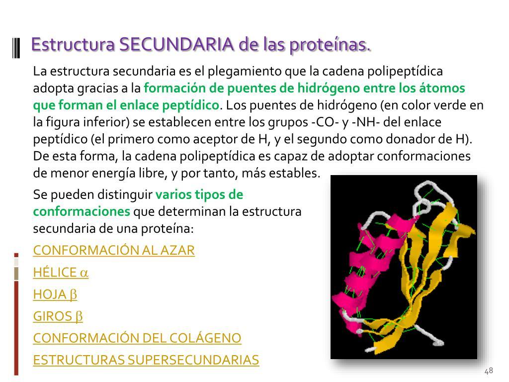 Ppt Bioquímica Estructural Las Proteínas Powerpoint