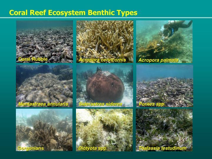 Coral Reef Ecosystem Benthic Types