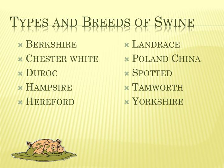 Types and breeds of swine1