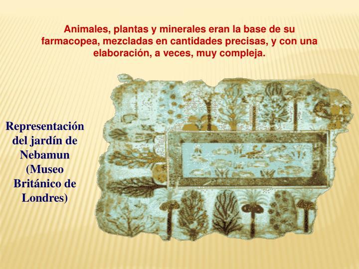 Animales, plantas y minerales eran la base de su farmacopea, mezcladas en cantidades precisas, y con una elaboración, a veces, muy compleja.