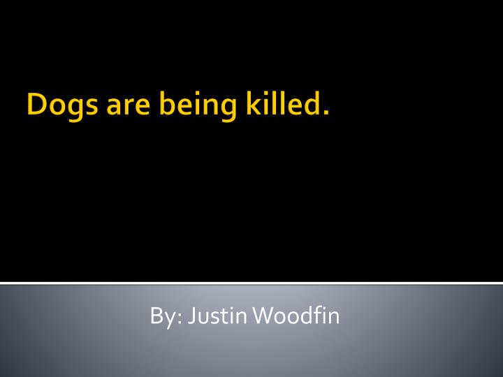 dogs are being killed n.