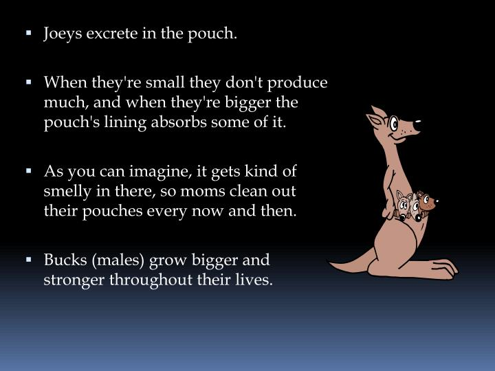 Joeys excrete in the pouch.