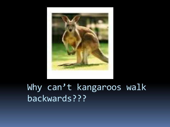 Why can't kangaroos walk backwards???