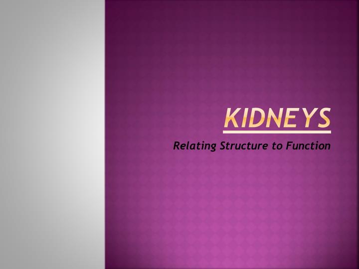 kidneys n.