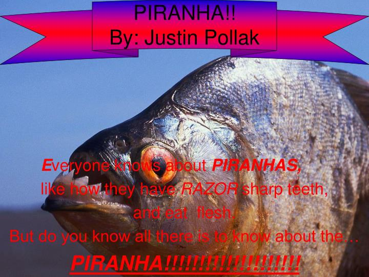 piranha by justin pollak n.