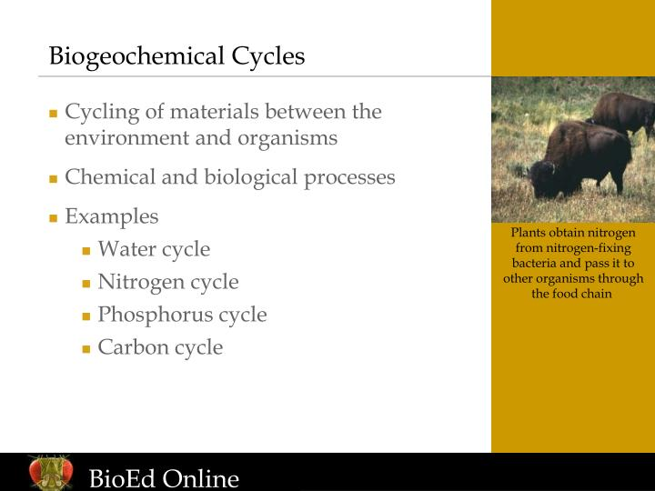 biogeochemical cycles n.