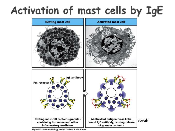 Activation of mast cells by