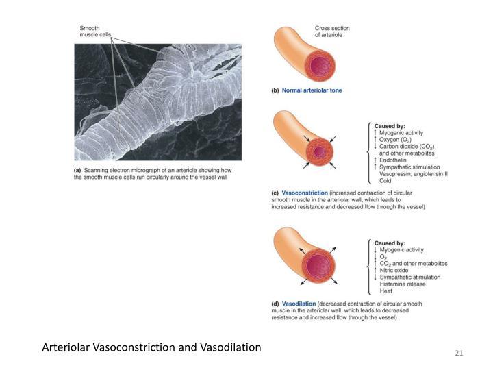 Arteriolar Vasoconstriction and