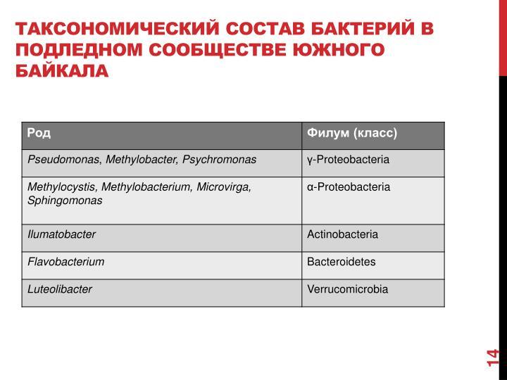 Таксономический состав бактерий в подледном сообществе южного Байкала