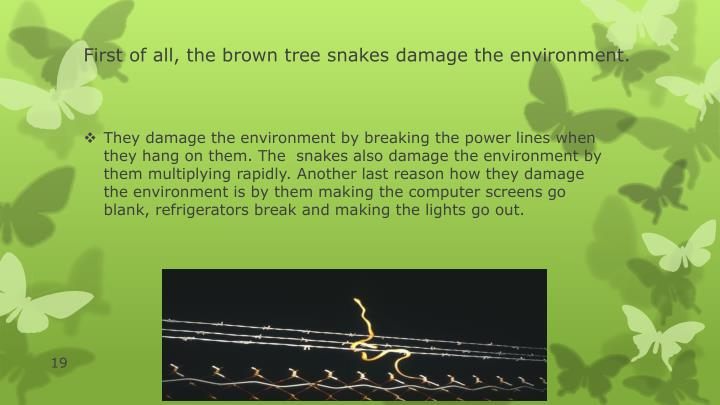 First of all, the brown tree snakes damage the environment.