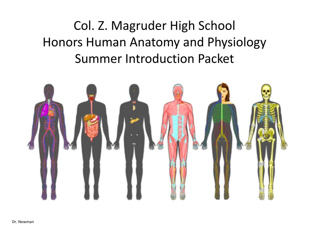 Ppt Col Z Magruder High School Honors Human Anatomy And