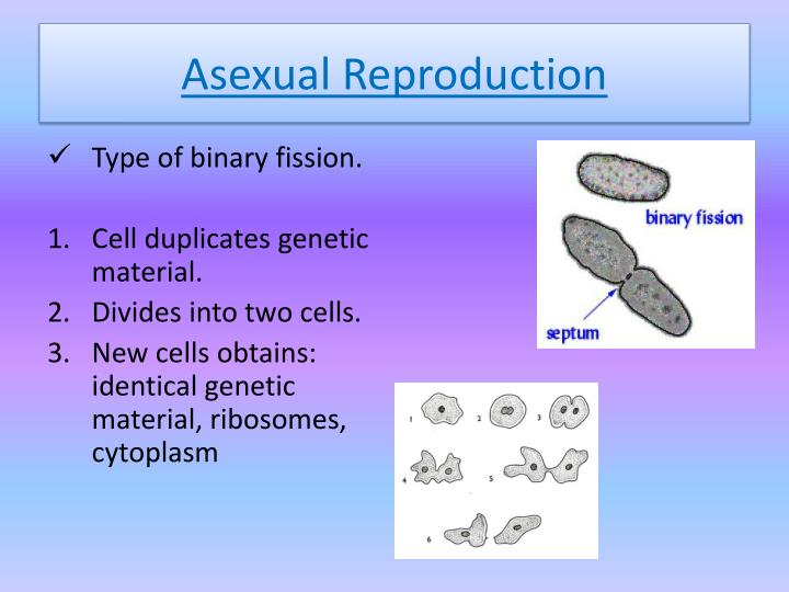 Die verb 3 forms of asexual reproduction