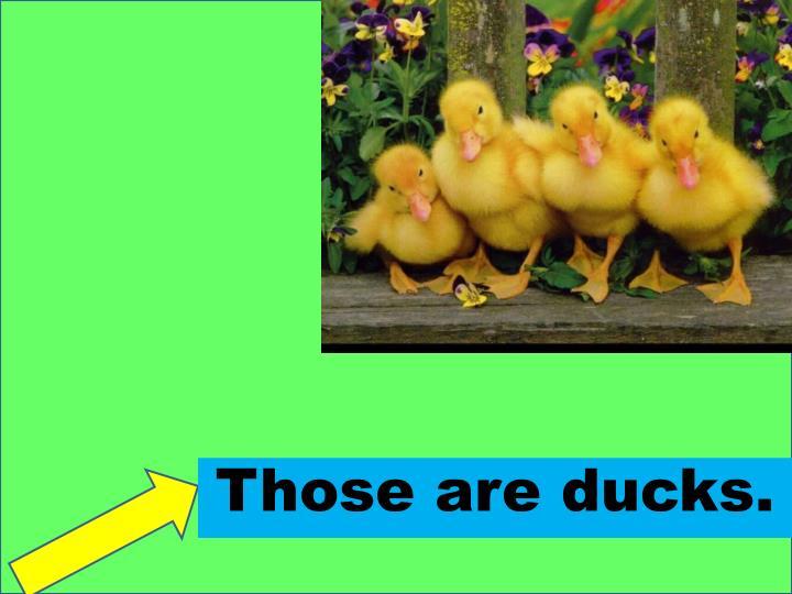 Those are ducks.