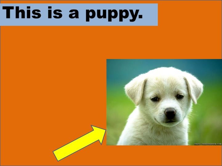 This is a puppy.