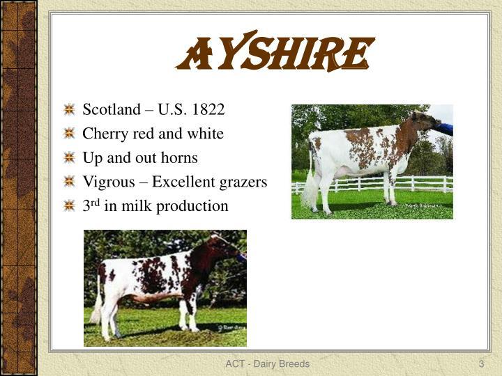Ayshire