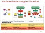 muscle metabolism energy for contraction