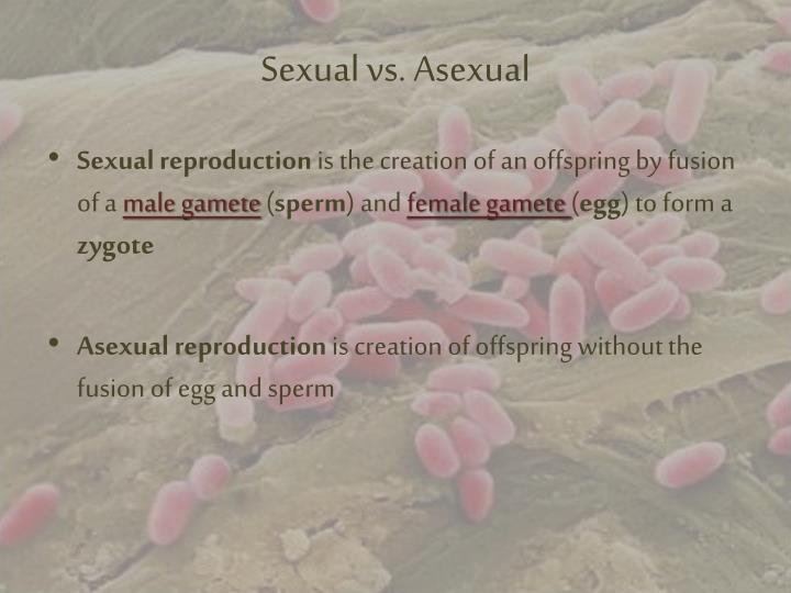 Sexual vs asexual
