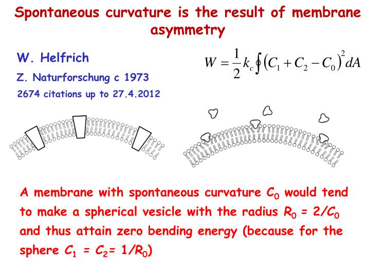 Spontaneous curvature is the result of membrane asymmetry