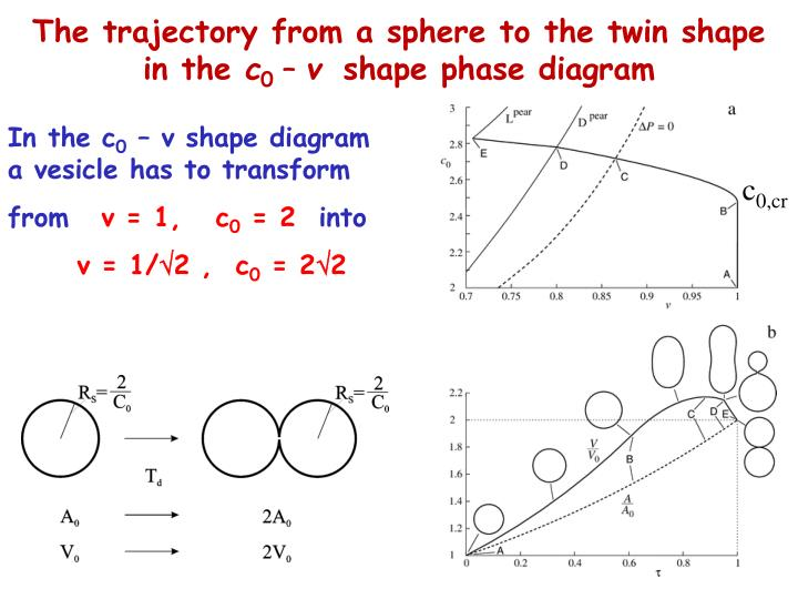 The trajectory from a sphere to the twin shape in the