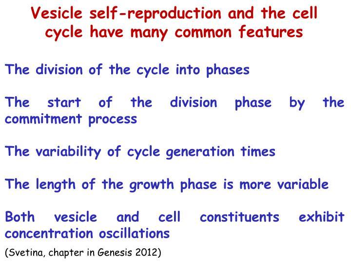 Vesicle self-reproduction