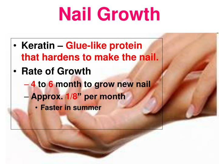 PPT - Nail Theory PowerPoint Presentation - ID:2742453