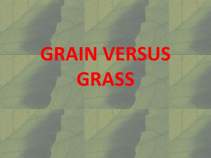 GRAIN VERSUS GRASS