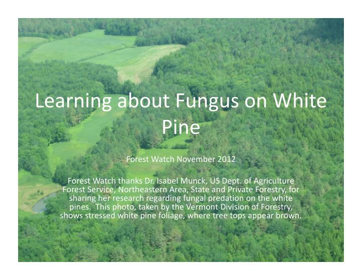 Learning about fungus on white pine