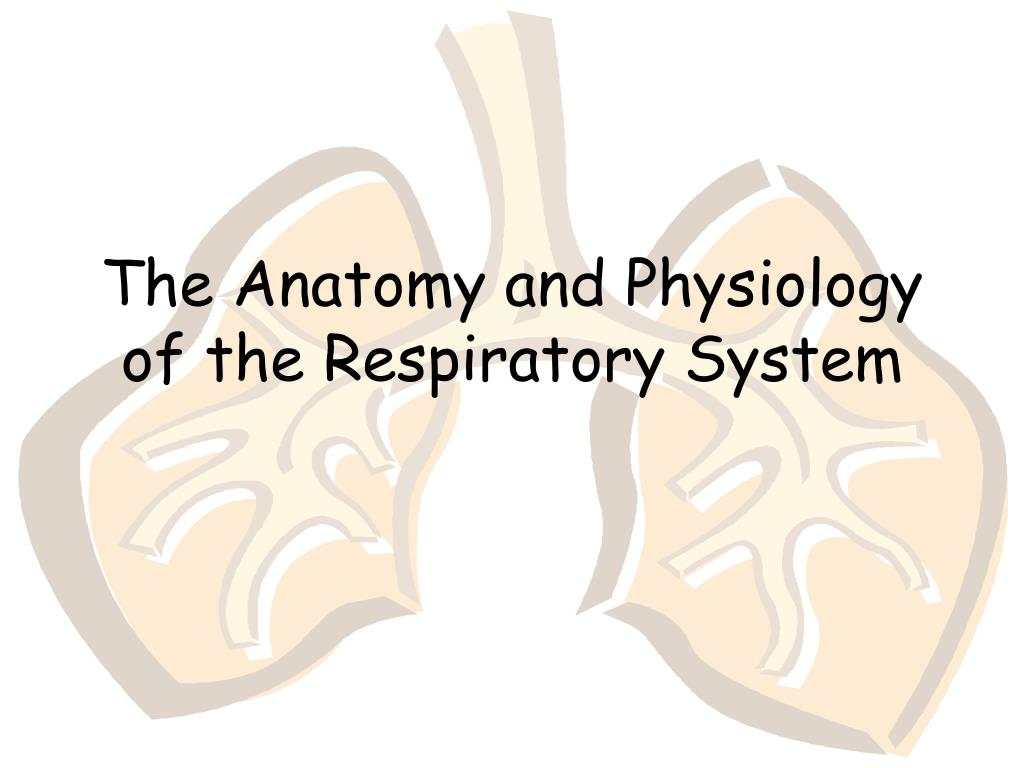 PPT - The Anatomy and Physiology of the Respiratory System ...