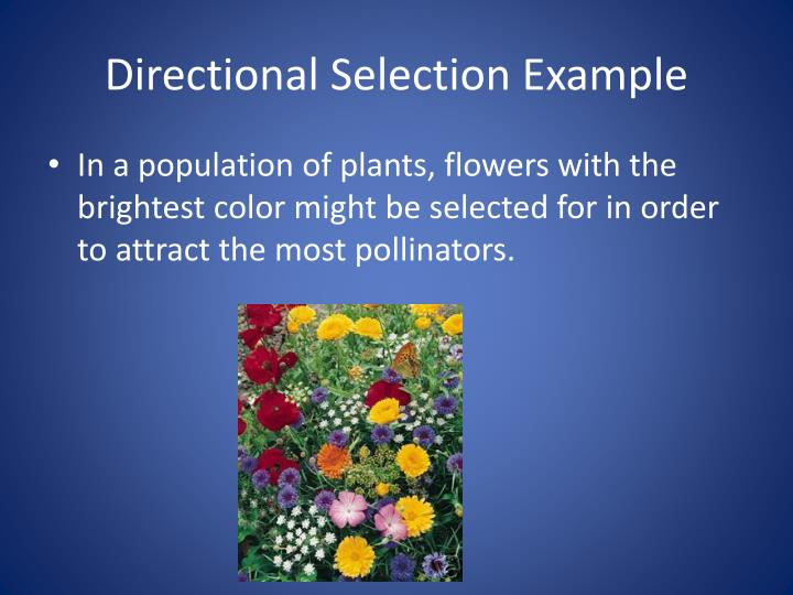 Ppt Types Of Natural Selection Notes Powerpoint Presentation Id