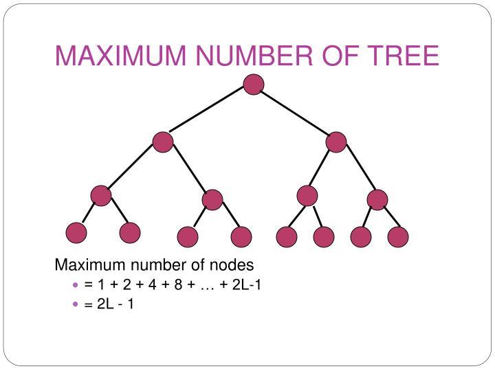 MAXIMUM NUMBER OF TREE