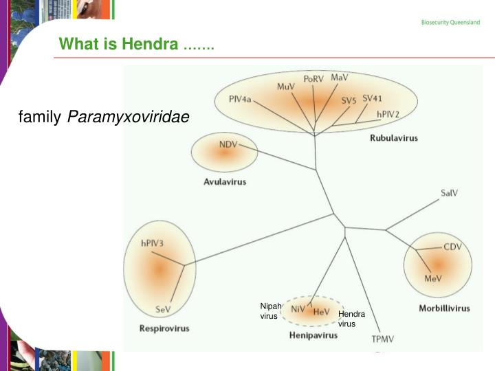 What is hendra