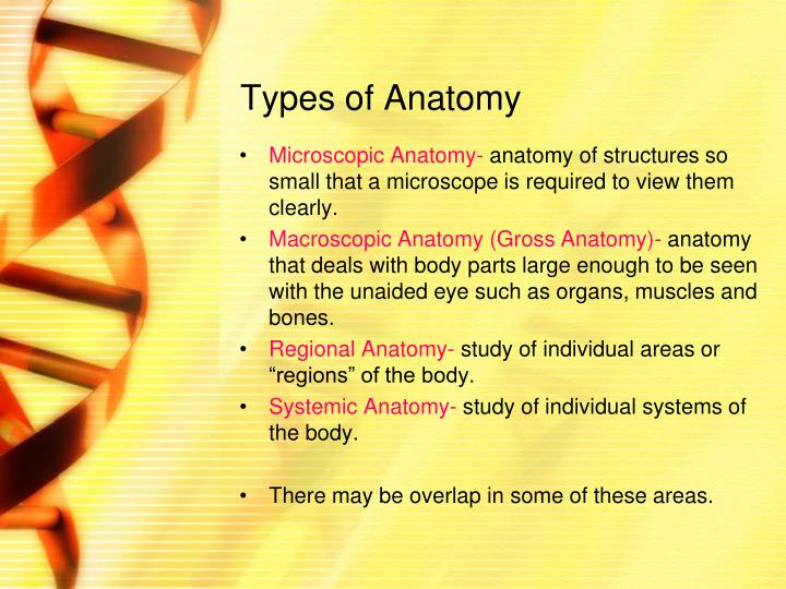 PPT - Welcome to Anatomy and Physiology PowerPoint Presentation - ID ...