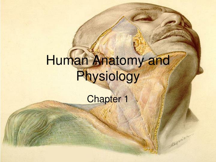 Ppt Human Anatomy And Physiology Powerpoint Presentation Id2746323