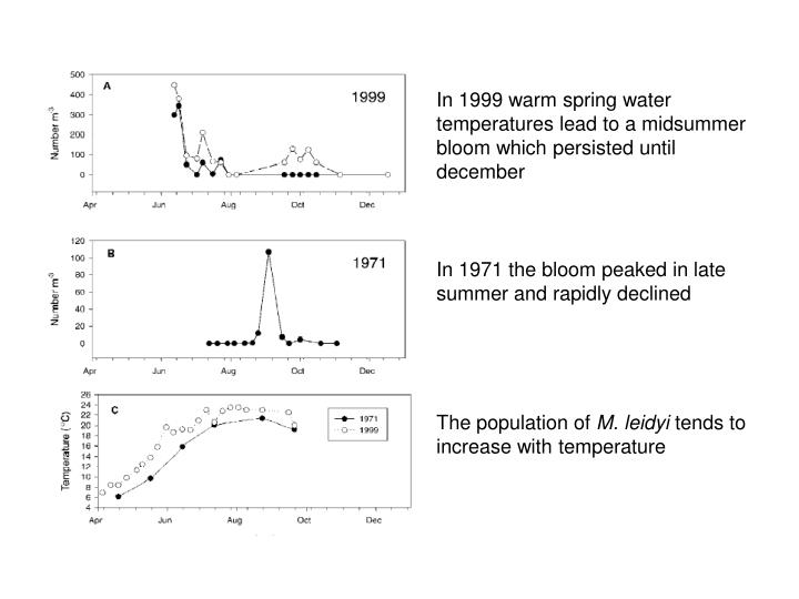 In 1999 warm spring water temperatures lead to a midsummer bloom which persisted until december