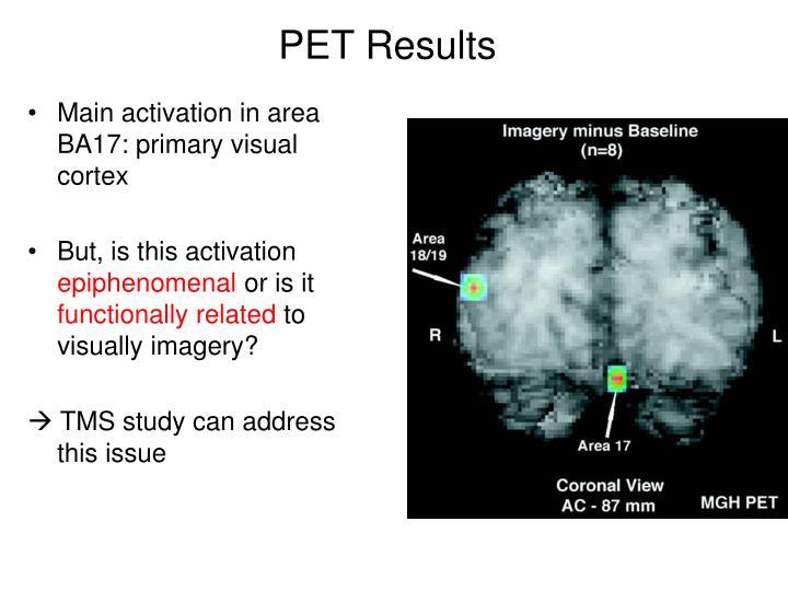 Main activation in area BA17: primary visual cortex