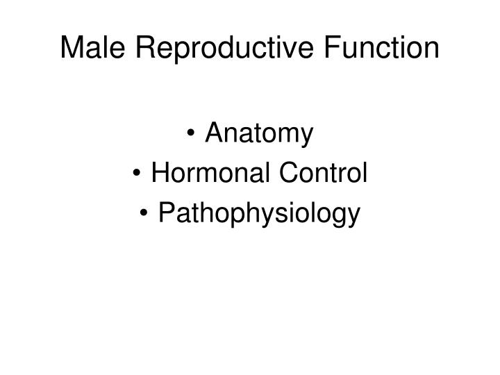 male reproductive function n.