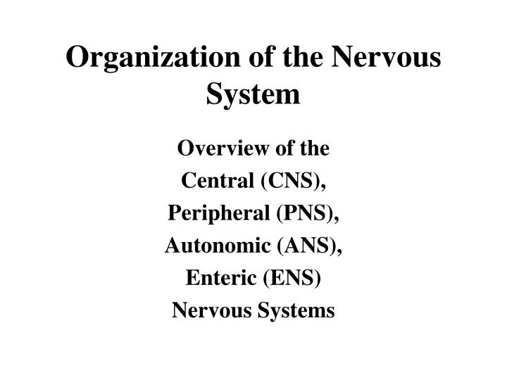 organization of the nervous system n.