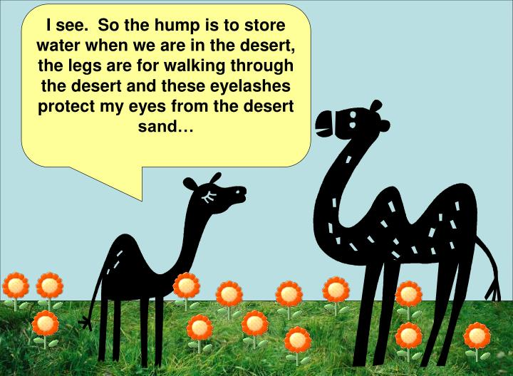 I see.  So the hump is to store water when we are in the desert, the legs are for walking through the desert and these eyelashes protect my eyes from the desert sand…