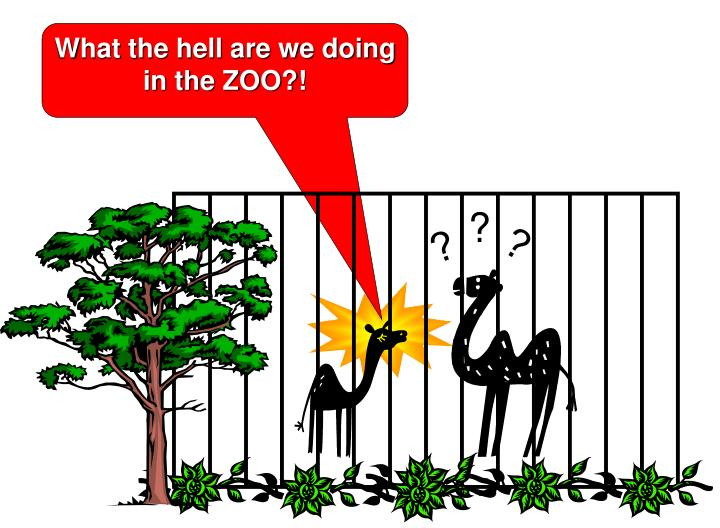 What the hell are we doing in the ZOO?!
